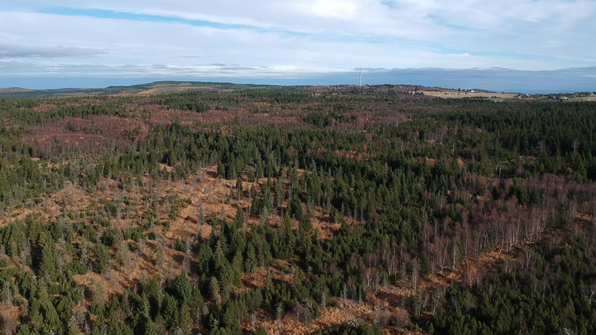 Březové porosty rašeliniště U jezera, v pozadí Kahleberg, Lugstein a Cínovec, 27.10.2019, autor Kryštof Volf